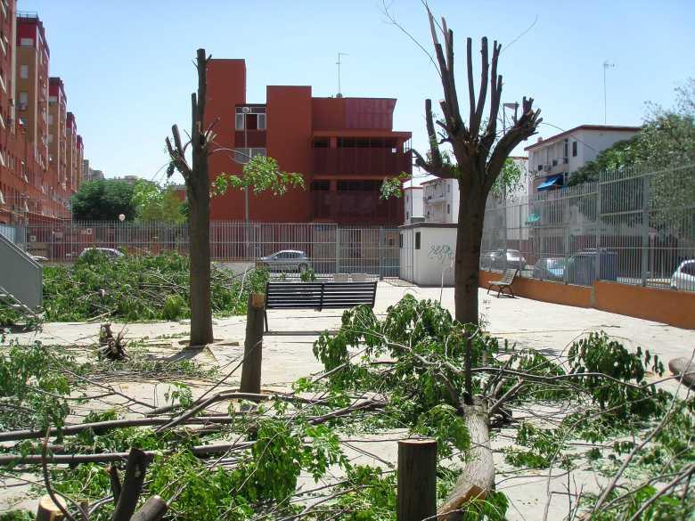 Amistad mamada publico en Sevilla-5684